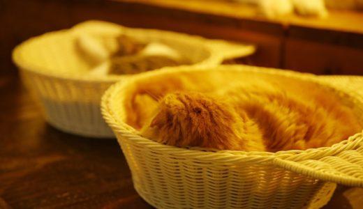 猫カフェ美猫に行ってきた。美猫と古民家が写真に最高