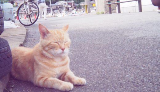 【猫島・福岡】相島が猫写真天国だし近いし最高